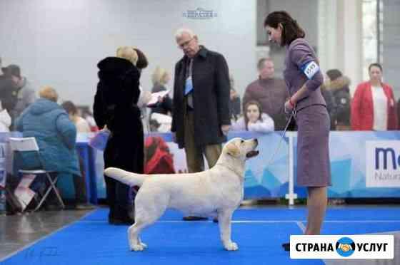 Хендлер - подготовка к выставке (хендлинг) Иркутск