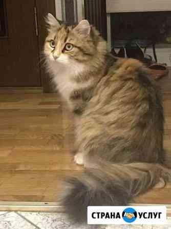 Ищем кота для вязки Севастополь