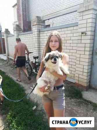 Выгул собак Саратов