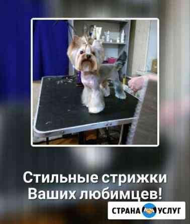 Стрижка собак Рыбинск