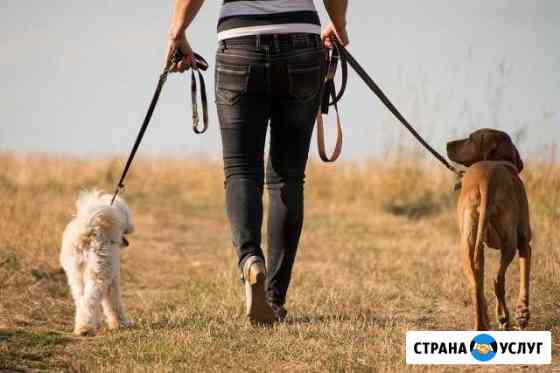 Выгул вашей собаки в Тамбове Тамбов