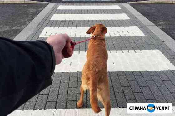 Выгул собак Рассказово