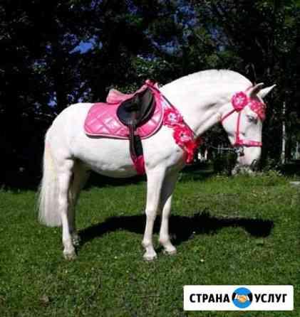 Пони и лошади на ваш праздник Тверь