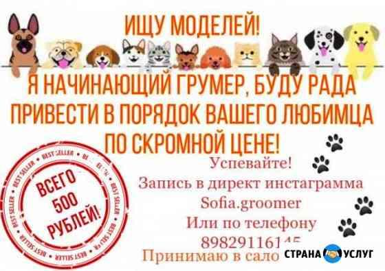 Стрижка собак и кошек Тюмень