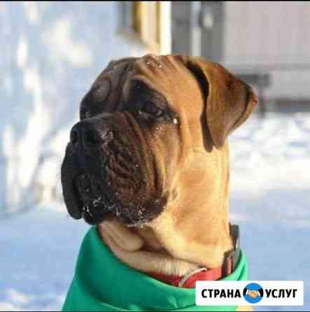 Вызов ветеринарного врача на дом Новосибирск
