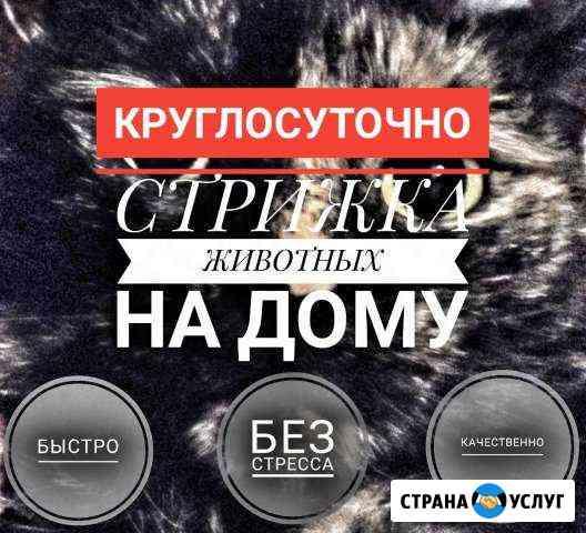 Стрижка собак и кошек. Ветврач на дом Ульяновск