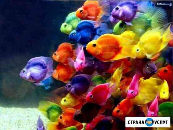 Профессиональная чистка аквариумов и террариумов Новосибирск