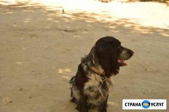 Стрижка собак под машинку Астрахань