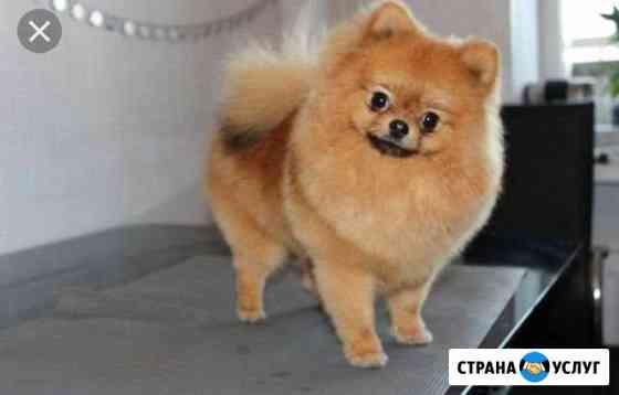 Стрижка кошек и собак Пермь