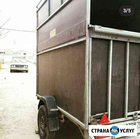 Перевозка лошадей Ачхой-Мартан
