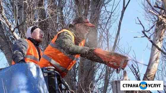 Спил деревьев и кустарника с утилизацией Великий Новгород