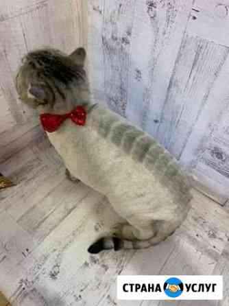 Стрижка кошек Томск