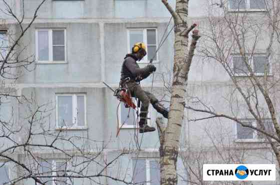 Удаление деревьев.Спилить дерево. без автовышки Йошкар-Ола
