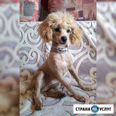 Стрижки собак и кошек. Грумминг Новосибирск