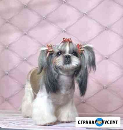 Стрижка собак Тамбов