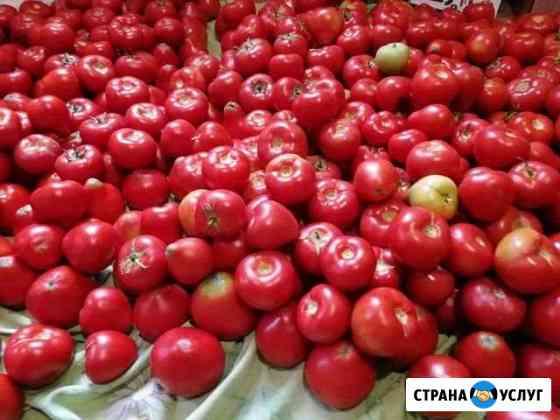 Продам помидоры домашние Черногорск