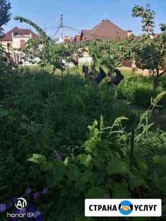 Прополка, уборка огородов Астрахань