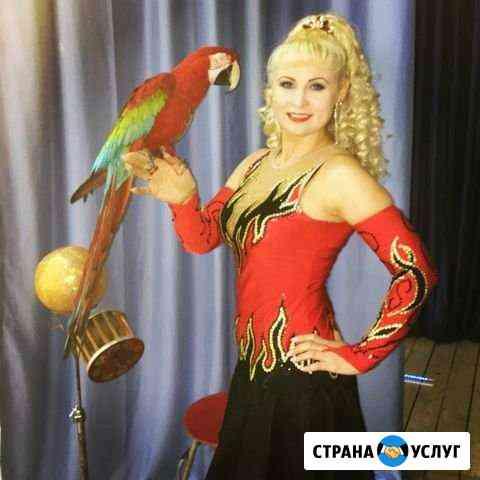 Попугай дрессированный на ваш праздник Абакан