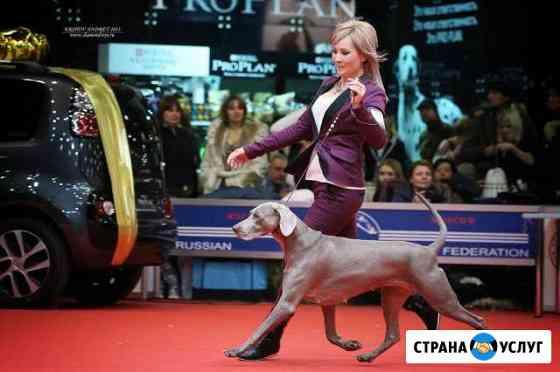 Кинолог- дрессировка собак Ярославль