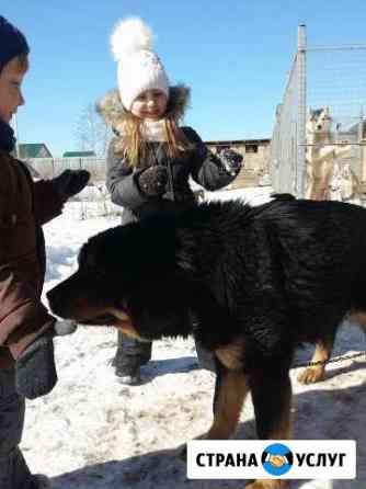 Уход за собакой Переславль-Залесский
