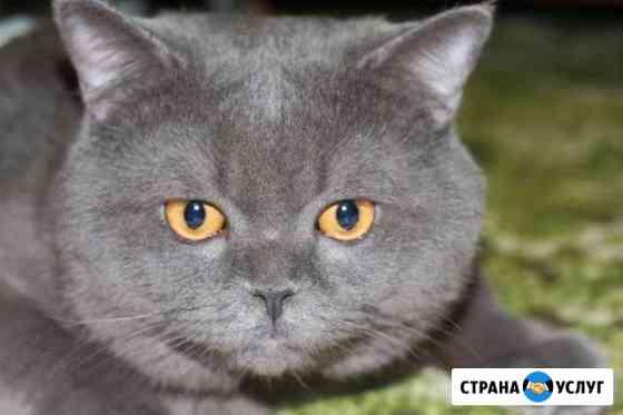 Котик для вязки Новомосковск