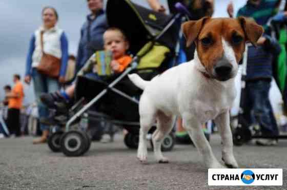 Выгул собак Воронеж