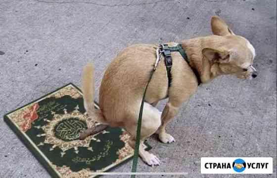 Я Мухаммед Буд выгуливаю собак и кошек Грозный