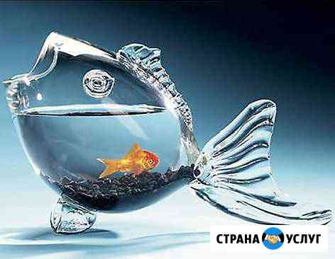 Оформление, обслуживание аквариумов и тп Уфа