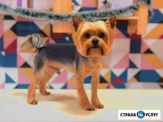 Груминг-салон, стрижка собак и кошек Курск