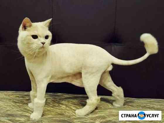 Стрижка котов Остров