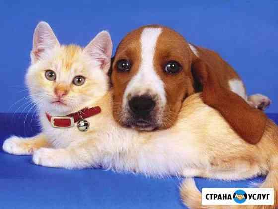 Стрижка собак и кошек.Выезд на дом Иваново