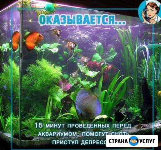 Изготовление, ремонт и обслуживание аквариумов Владикавказ