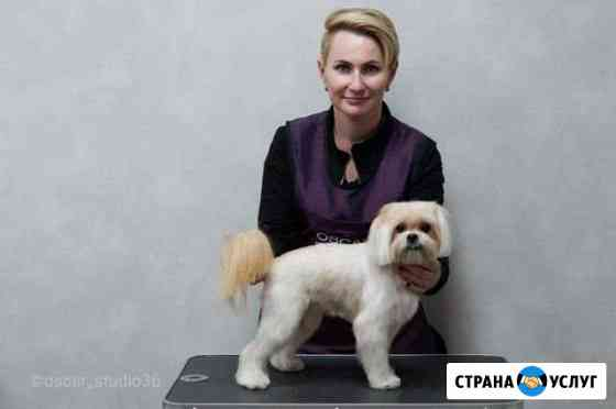Стрижка кошек и собак Воронеж
