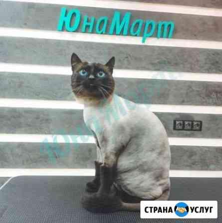 Стрижка собак, кошек. Уход за животными. Груминг Новосибирск