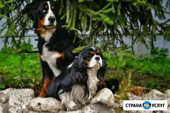 Гостиница для собак Белый Бим Калуга