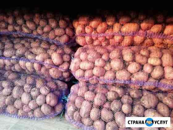 Картофель Завьялово