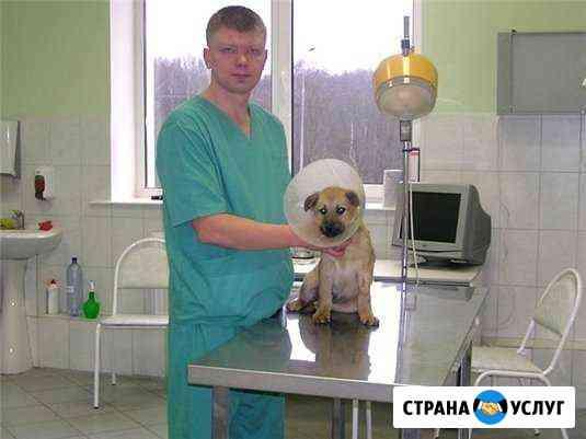 Ветеринарные услуги Соликамск