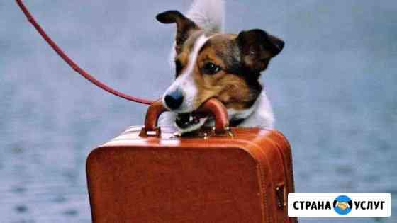 Домашняя передержка собак Новосибирск