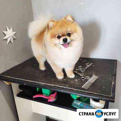 Стрижка собак, груминг Воронеж