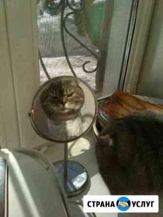 Стрижка собак/кошек Выезд на дом Новосибирск