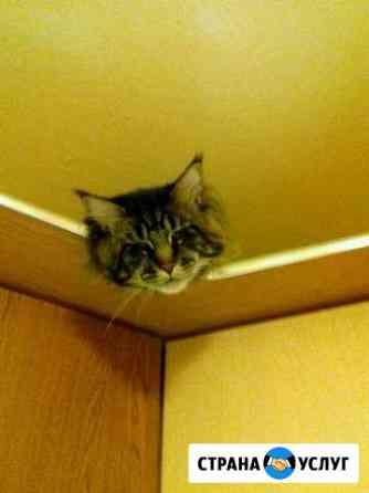 Зрелый котик Мейн-кун Тимон ждёт подружку для вязк Тобольск