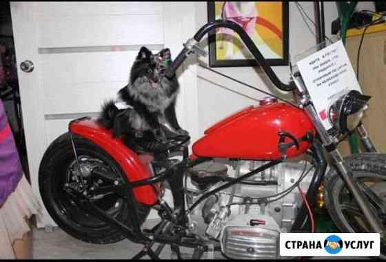 Стрижка собак и кошек Смоленск