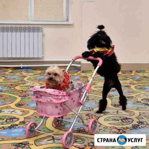 Собачки дрессированные на детский праздник Абакан