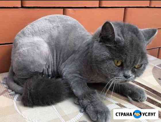 Стрижка кошек Владикавказ