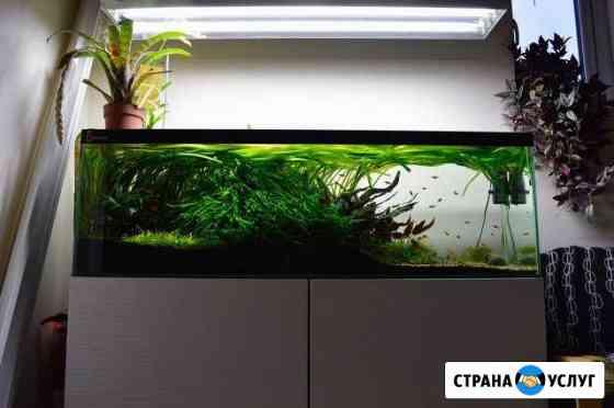 Дизайн обслуживание запуск аквариумов Евпатория