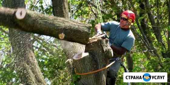Спил, вырубка деревьев Чебоксары