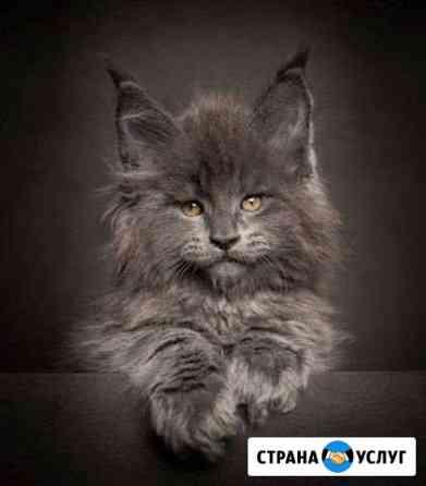 Стрижка кошек, грумер Новосибирск
