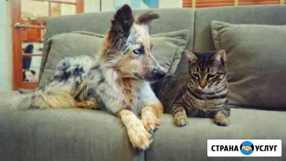 Передержка для кошек и собак (домашняя) Тверь