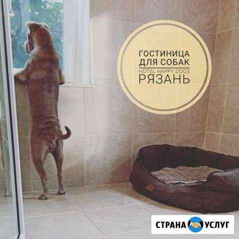 Гостиница для собак (передержка) Зоотакси Рязань