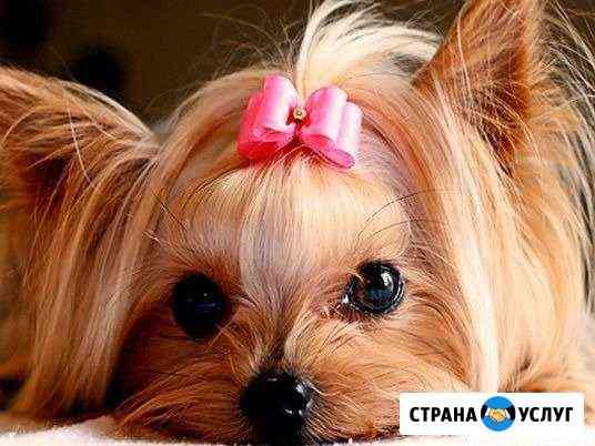 Стрижка собак И кошек Калининград